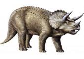 Фаллоимитатор Ceratops - 21,5 см.