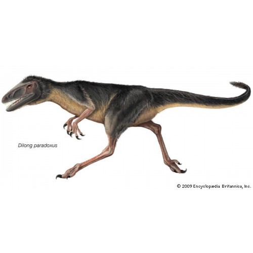 Фаллоимитатор Dilong - 25 см.